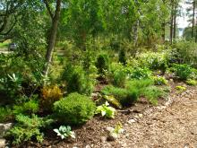 Barrväxter och rhododendron klarade första vintern