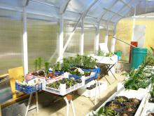 Nytt växthus (egen konstruktion), 2013