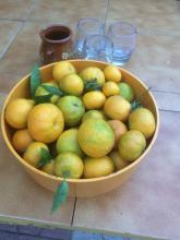 21  November 2017 De sista mandarinerna är skördade.