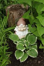 Trädgårdstomte, bakom en trädgårdsfunkia