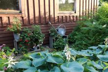 Melllan hostor och vägg: grus, potatislådor med bl.a. små fuchsior o